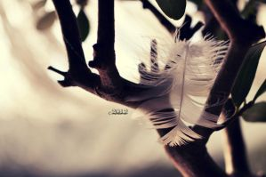 broken wings out there... by lisarime