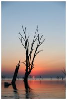 Drowned Trees Sunset 06 by michref