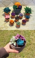 Succulent Experiments by MadeleiZoo