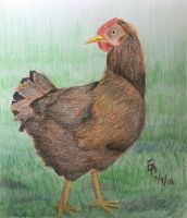 Rhode Island Red Hen by mayorlight