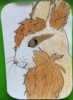 FluffCritter ACEO by Pongoi