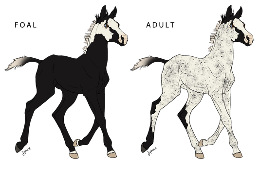 WBS Blackbeard's Ghostly Sails Foal by angry-horse-for-life