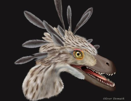 Velociraptor mongoliensis bust life reconstruction by ODemuth