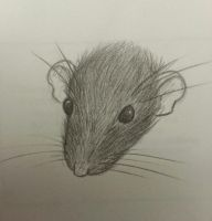 rat face by Kalyandra