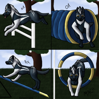 Agility Titles for NDLEAdventures by fierfairy42