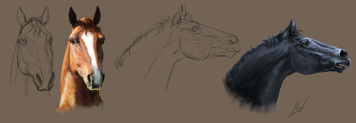 Horse Portrait Study by ColossalBeltloop