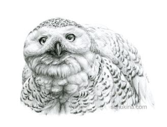 Snowy Owl by sschukina