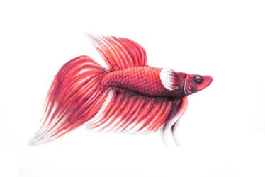 Realistic Red and White Betta Fish Plush by BeeZee-Art