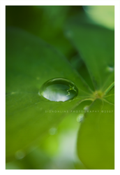 .: Clover drop :. by sidh09