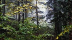 Breath of the morning forest by kriskeleris