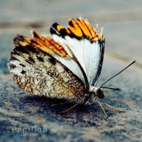 Papillon by Jules1983