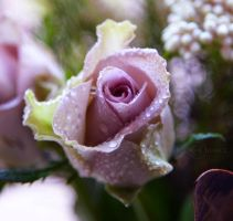 Simply Be a Rose by WhiteBook
