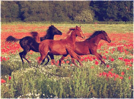 Run With The Wild Horses by realmistress