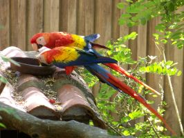 parrots by Beryl-Thanh