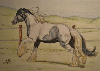 Gypsy Vanner by KnifeInToaster