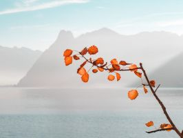 Autum colors. by 8moments