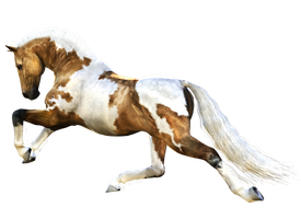 Horse 8 PNG by Variety-Stock