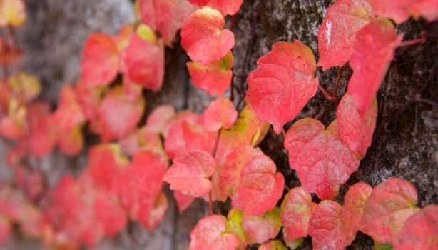 Changing Colors of the Season by Tr1shaPumk1n