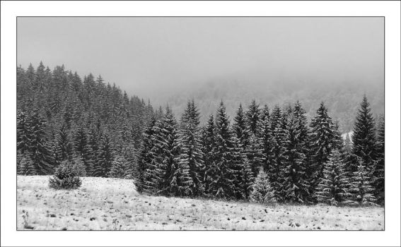 The First Snowfall I BW by Nadia1956