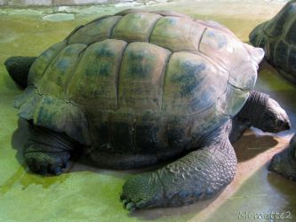 Giant turtle for Anna by Momotte2