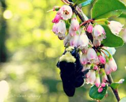 Busy Bee by Lillith8810