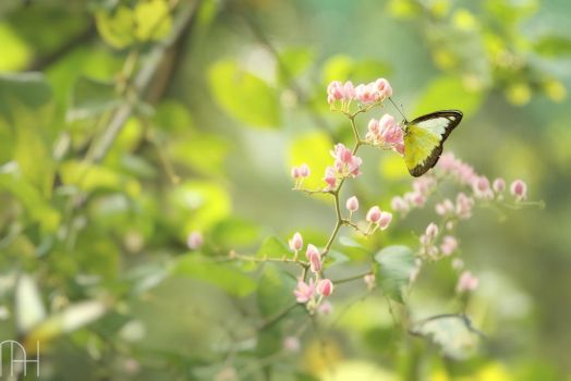 Butterfly by nader-tharwat