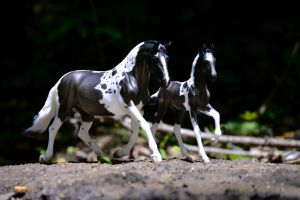 A Mare and her Colt by KLK-Photography