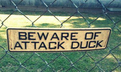 Beware of Attack Duck Sign by AkatsukiGirl27