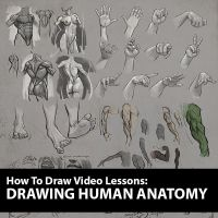 Figure Drawing Course: Human Anatomy by ablaise