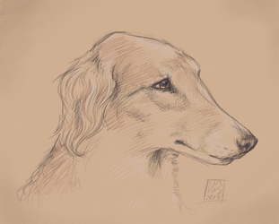 Borzoi - sketch by theclevercarrot