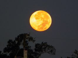 Harvest Moon 2013 by justanewb42