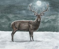 Stag by blayrd