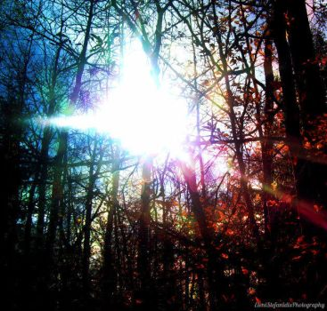 A Light In The Forest by LivelovelifeEleni