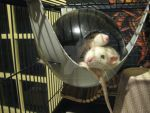 Hector and Firi Rat relaxing in the space pod. by Eternatease