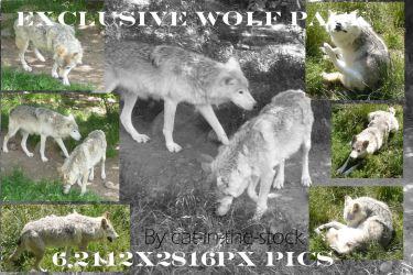Exclusive wolf pack by Cat-in-the-Stock