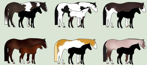 Mystery Foal adopts by WildForests-Stables