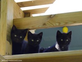 Three Black Kittens by CatharsisJB