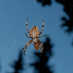 Spider - D658 by AGF81