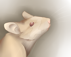 Mouse by SolarXolverite
