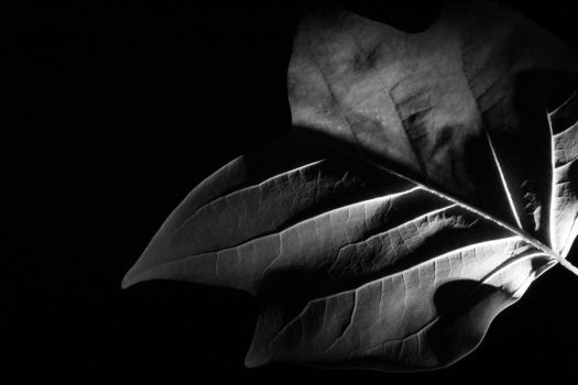 Veins of black by Day329Photography