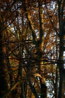 Composition of branches by magickalmoon