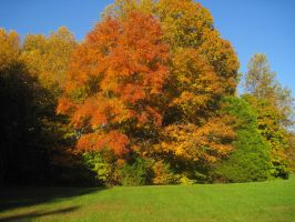 Fall Color Stock1 by Mistshadow2k4