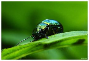 .:Green beatle:. by no2klops