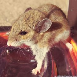 house mouse by sataikasia