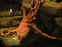 Things from DC: Giant Octopus by Destiny-Carter