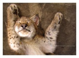 Lucky Lynx by HeWhoWalksWithTigers