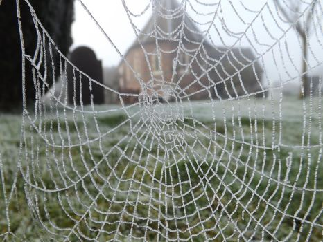 Icy Web 2 by WhiteWolfStock