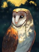 Barn Owl by MugiwaraWolf