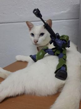 Gunpla and the cat... by Gentic