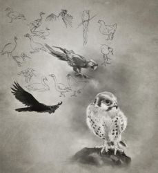Daily Practice 01 24 2014, Birds by Eclectixx